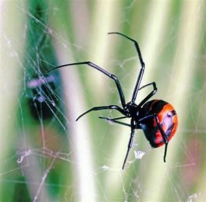 Viele Spinnen Im Haus : spinnen bek mpfen gifte auf wasserbasis wirken nicht welt ~ Watch28wear.com Haus und Dekorationen