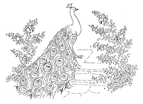 Coloring Pages Peacock Gianfredanet