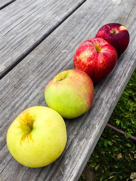 orchard color color inspiration apple orchard merriment design