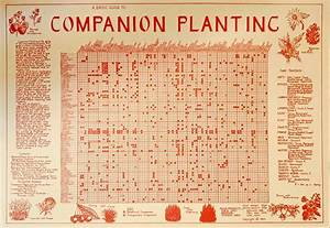 Wall Charts Companion Planting Wall Chart Eden Seeds