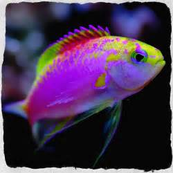 Colorful Tropical Fish Colors