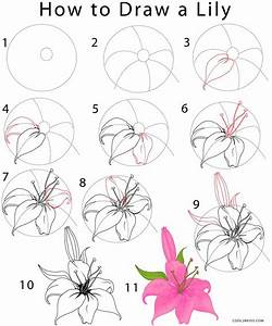 How to Draw a Lily (Step by Step Pictures) | Cool2bKids