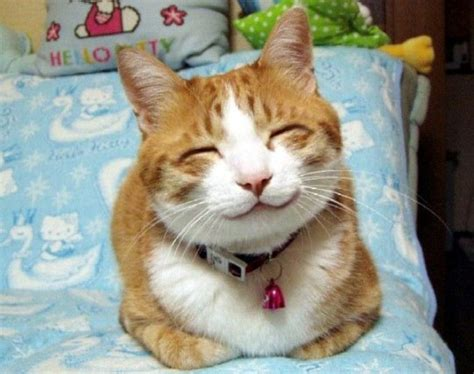 25 Cute Cats Around The World Hostelbookers