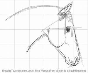 Horse Head Drawings - Hot Girls Wallpaper