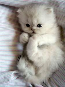 Cute cat ^-^ - Random Photo (20510717) - Fanpop