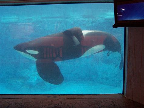 New Testimony In Fatal Killer Whale Attack