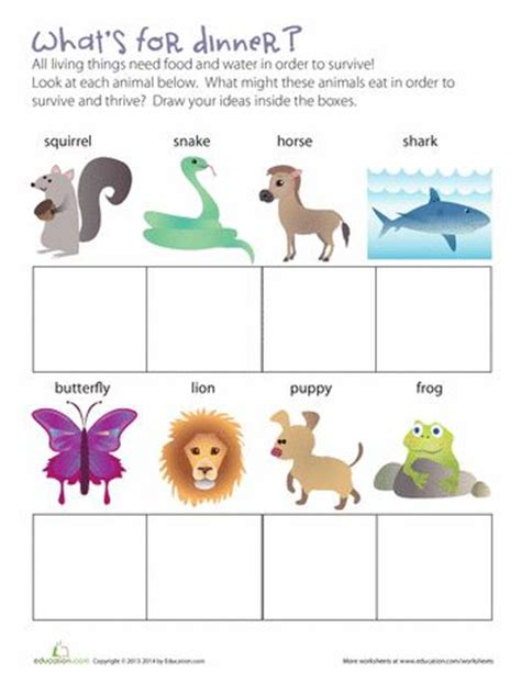 what animals eat science worksheets and types of