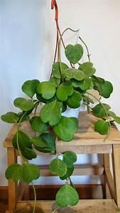 Pflanze Für Dunkle Räume : 1001 ideen f r zimmerpflanzen f r wenig licht ~ A.2002-acura-tl-radio.info Haus und Dekorationen