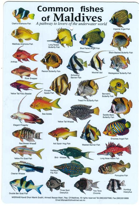 common fish  maldives fish chart marine fish