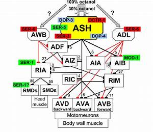 Ash Wiring Diagram And Localization Of Key Monoamine