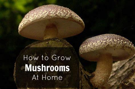 grow mushrooms at home how to grow mushrooms at home