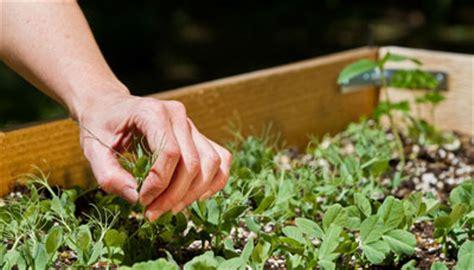 Bepflanzen Eines Hochbeetes by Hochbeet Ratgeber Das Magazin Mit Allen Tipps Und