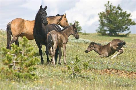 montana wild horses redbubble horse
