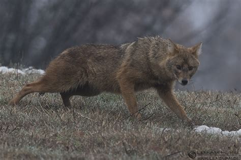 The Golden Jackal workshop in Bulgaria started slow