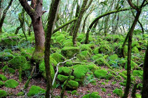 Mossy Forest Photos Diagrams And Topos Summitpost