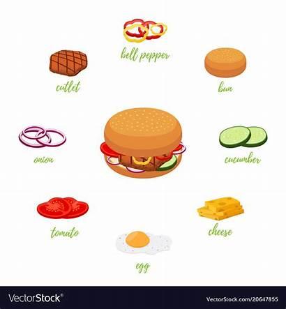 Hamburger Menu Ingredients Different Vector