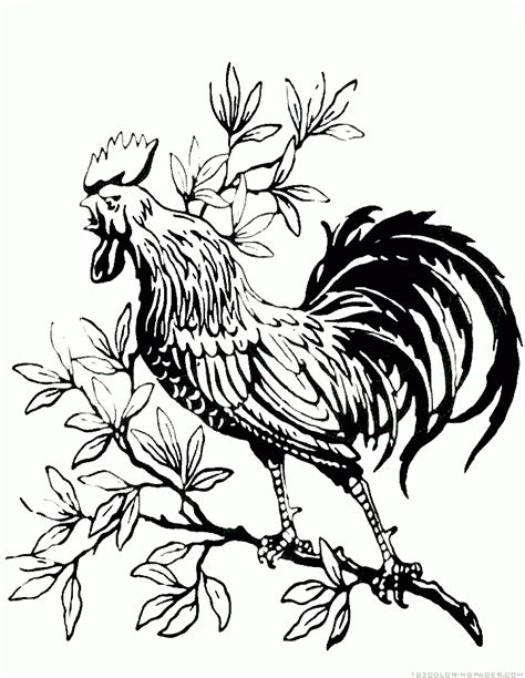 rooster coloring pages part