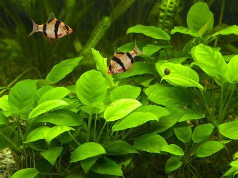 attention aux 233 l 233 ments naturels pour d 233 corer aquarium