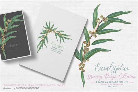 eucalyptus greenery collection  images elegant