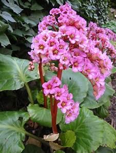 Winterharte Blumen Für Den Garten : durch schattenpflanzen den garten versch nern ~ Whattoseeinmadrid.com Haus und Dekorationen