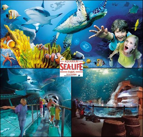 aquarium sea val d europe sea l aquarium du val d europe jcsatanas frjcsatanas fr