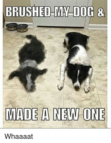 New Dog Meme - brushed my dog made a new one whaaaat dogs meme on sizzle