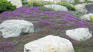 Steingarten Bilder Beispiele : steingarten anlegen und gestalten natur und architektur verbinden ~ Whattoseeinmadrid.com Haus und Dekorationen
