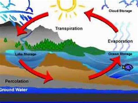 cool water cycle song youtube