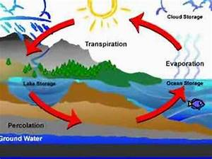 What Happens In The Water Cycle