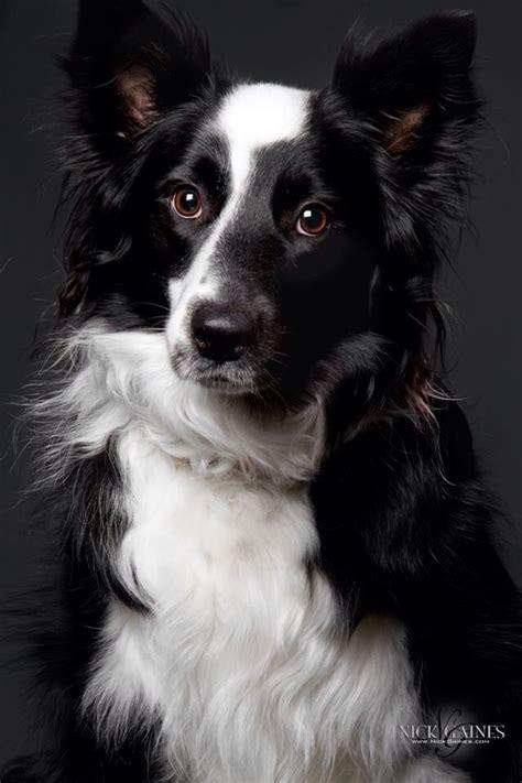 dog gonit images  pinterest adorable