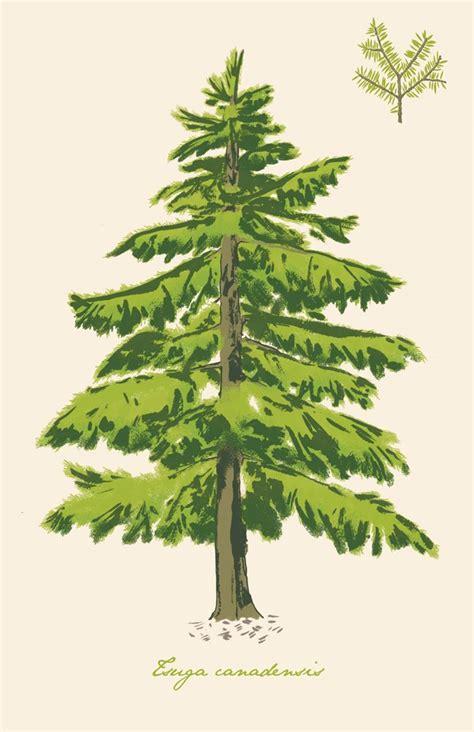 pennsylvania state trees hemlock eastern belt rust ohio beltmag