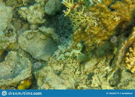 coral fish predators reef surroundings blend mimicry prey grouper predatory lurks helps perfect
