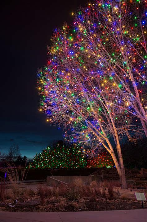 chatfield botanic gardens christmas lights blossoms of light denver botanic gardens
