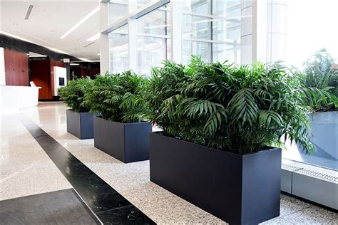 interior plant service interior plant service for offices restaurants or any
