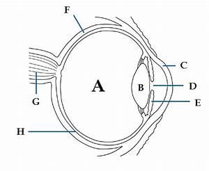 Eye Diagram For Kids