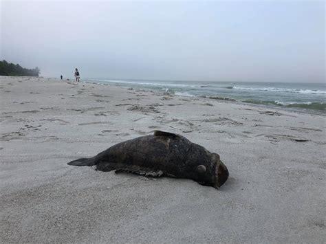 goliath grouper dead found