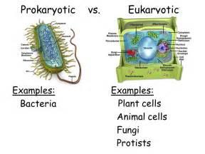 Prokaryotic and Eukaryotic Cells Examples