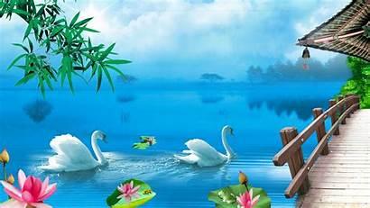 Swan Lake Wallpapers Desktop Nature Swans Disney