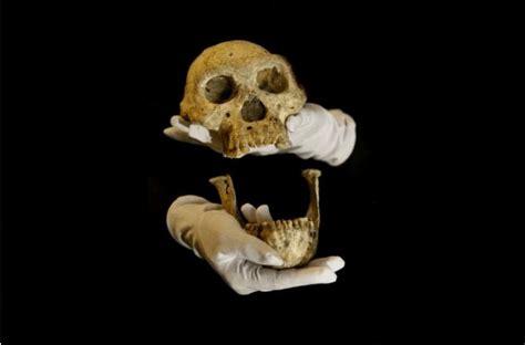 si鑒e de l otan foto l 39 uomo nato da una singola specie si riscrive la storia dell 39 evoluzione repubblica it