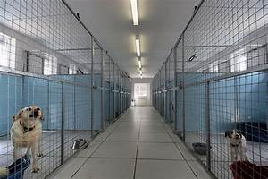 gallery our facilities whitehouse kennels cattery With best dog boarding facilities