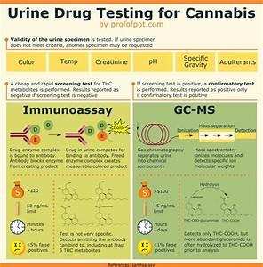 certo lab drug test