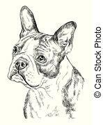 boston terrier clipart  stock illustrations  boston