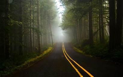 Forest Dark Road Wallpapers Desktop Nature Landscape