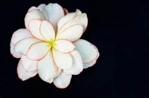 Blumen Verschicken Auf Rechnung : blumen auf rechnung bestellen liste aller shops ~ Themetempest.com Abrechnung