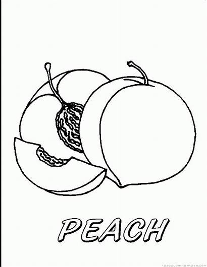 Peach Coloring Fruit Pages Printable Tree Template