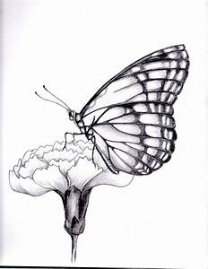 Easy Flying Butterfly Drawings In Pencil - Drawing Of Sketch