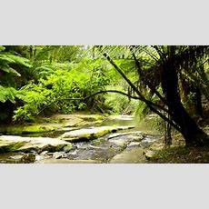 Forest Nature Sounds Australia  Jungle Sounds With