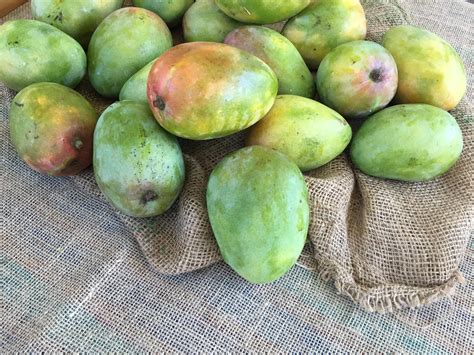 What Is The Best Mango Variety? Will 7,000 Mangos Reveal