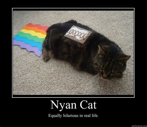 Annoying Cat Meme - nyan cat equally hilarious in real life lolcat