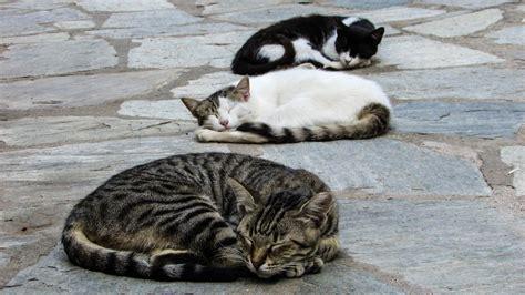 images animal cute relax kitten sleeping